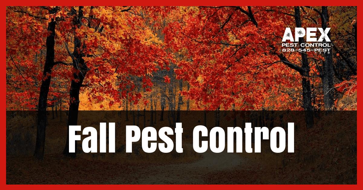 Fall Pest Control: Expert Pest Prevention Tips