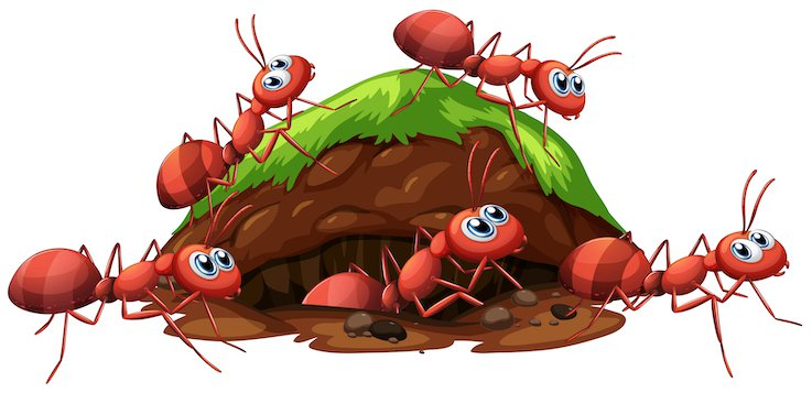 A Fire Ants and Hole