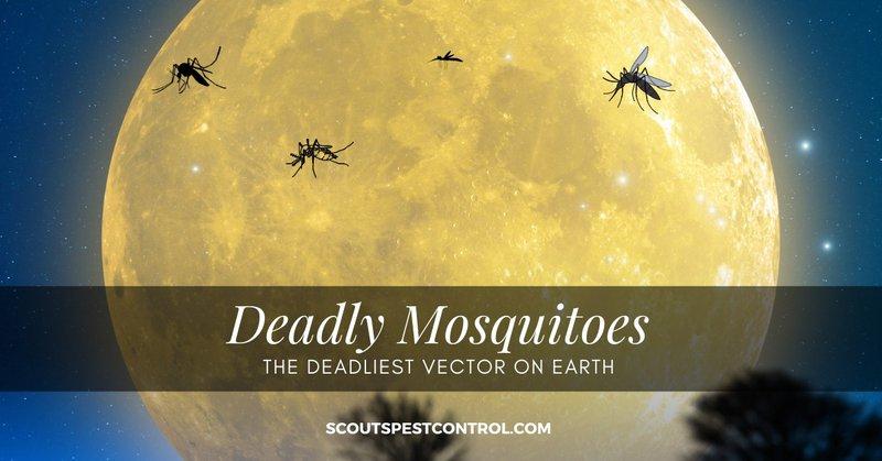 deadliest mosquitoes