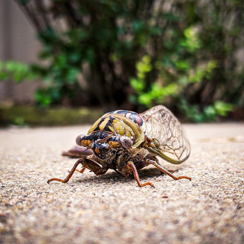 Cicada shot on Google Pixel 3 XL